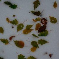 листья на снегу :: Света Кондрашова