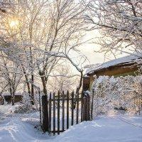 Зима пришла :: Tatyana Belova