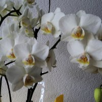 орхидея :: kuta75 оля оля
