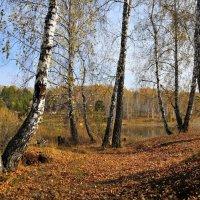 Осенняя зарисовка. :: Андрей В.