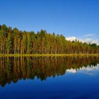 Два леса.Два берега. Два параллельных мира... :: Владимир Ильич Батарин
