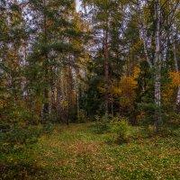 Осень в лесу :: Андрей Дворников