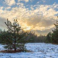 Закат в лесу :: Игорь Вишняков