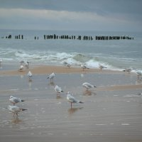 Осенние чайки :: Евгения Кирильченко