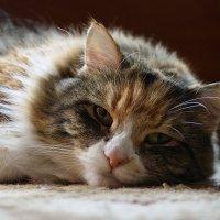 Утомилась :: VL
