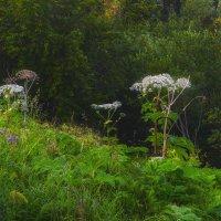 В лесу :: Наталья Копылова