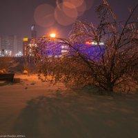 Ледяной куст. :: Виктор Евстратов