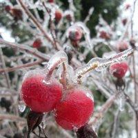 Ледяные ягоды. :: Михаил Попов