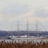 «Крузенштерн» спешит в родную гавань :: Маргарита Батырева