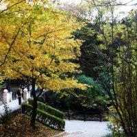 Осень в парке :: татьяна