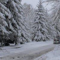 Улица Аллея Труда после снегопада. :: Виктор Иванович