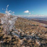 ледяным ветром обласкан :: Sergey Bagach