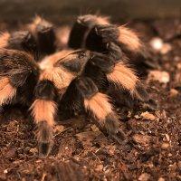 Ядовитый паук :: Юрий Пузанов