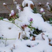 Зима в октябре :: Ольга Токмакова