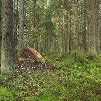 Лес в сентябре :: Aнна Зарубина