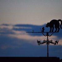 Кошки-мышки на закате :: alen.kon К