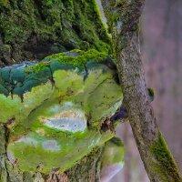 Зелено  -  не молодо ... :: Va-Dim ...