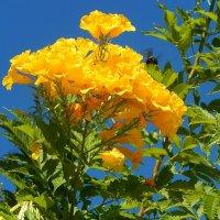 Собирательница нектара :: Natali