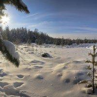 Околдован лес стоит, чудной жизнью он блестит 2 :: Сергей Жуков