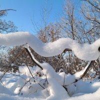 Снежные фантазии :: Андрей Заломленков