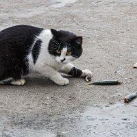 Рыбный котик :: Юрий Яловенко