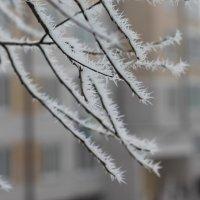 морозный день ноября :: Дмитрий