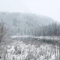 Дремлет лес под сказку сна... :: Марина Marina