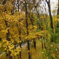 осень в парке :: Людмила