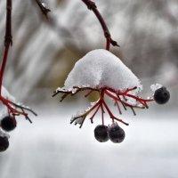зимняя ягода.. :: юрий иванов