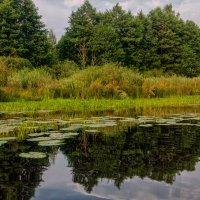 Озеро Старая речка :: Александр Березуцкий (nevant60)