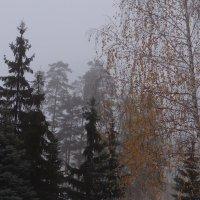 Утро туманное - 2 :: Юрий Владимирович 34