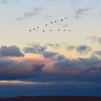 Журавли летят на юг :: Виктор Шандыбин
