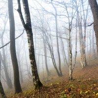 Осенний лес :: Иван