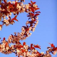 Цветы дерева. :: Оля Богданович