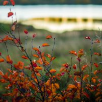 Ноябрь у озера :: Юлия Михайлычева