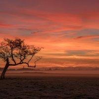 Рассвет в Феникс-парке :: Eugene Remizov