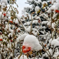 Зима :: Константин Поляков