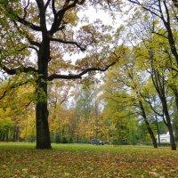 Осень пришла :: Алексей Цветков