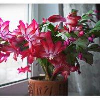 Цветы ноября. :: Любовь Чунарёва