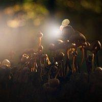 ...грибы - умная плесень.. :: Лилия .