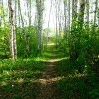 В лесу 3 :: Вячеслав Баширов