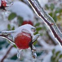 Последствия ледяного дождя :: Татьяна