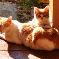 Солнечный котенок :: Татьяна