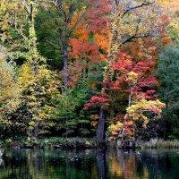 Разноцветная осень :: Tatiana Belyatskaya