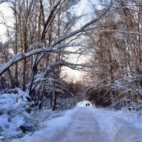 В зимнем лесу :: анна нестерова