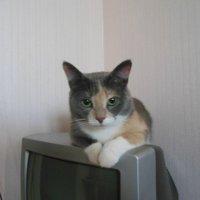 Моя киска) :: Татьяна