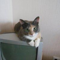 Моя киса) :: Татьяна