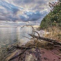 Прогулка по Куршскому заливу :: Владимир Самсонов