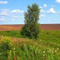 """""""Во поле берёзка стояла..."""" :: оля san-alondra"""