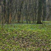 Весна :: Роман Кривеженко